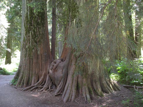 big-trees-small-picture